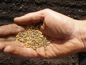 the-parable-of-the-mustard-seed[1]