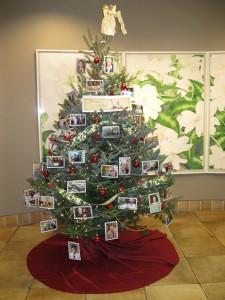 2013 MCP tree